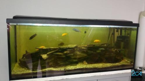 Serwis akwarium na terenie Wrocławia i okolic, Wrocław, oferta