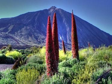 Wczasy na Teneryfie, LA OROTAVA Santa Cruz de Tenerife, oferta