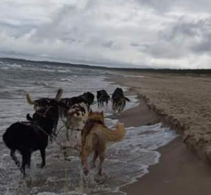 Wyprawa psim zaprzęgiem