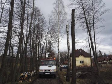 Wycinka drzew, Międzyrzecze dolne, oferta