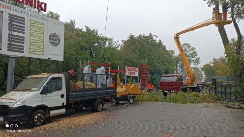 Wycinka drzew, karczowanie, usługa rębakiem, frezowanie pni., oferta