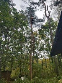 Wycinka drzew, oferta