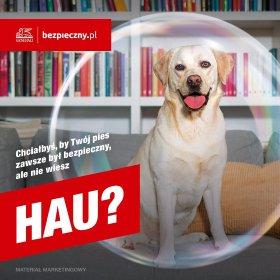 Ubezpieczenie psa - nowość na rynku
