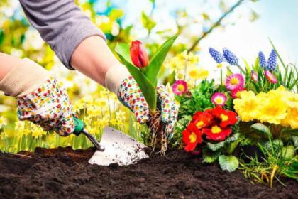 Projektowanie i aranżacja ogrodów, Piaseczno, oferta
