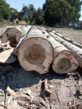 Wycinanie drzew karczowanie podcinanie koron drzew