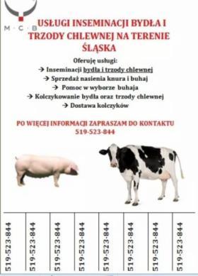 Inseminacja bydła, oferta