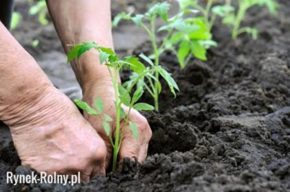 Ziemia pod Warzywa Szklarniowa Ogrodowa Limanowa Żegocina Tęgoborze, Limanowa, oferta