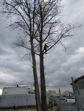 wycinka i przycinanie drzew, oferta