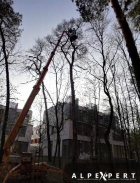 Wycinka drzew, pielęgnacja drzew, wycinka sekcyjna, arborysta, rębak, oferta