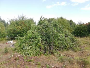 Karczowanie drzew i krzewów, Arciechów, oferta