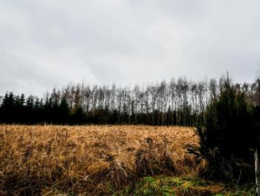 Działka z widokiem na Puszczę Zielonkę