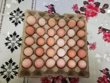 Sprzedam jaja wiejskie, Bydgoszcz, oferta