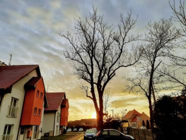 Wycinka i pielęgnacja drzew, Częstochowa, oferta
