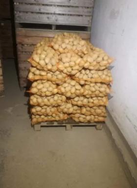 Ziemniaki Cebula Marchew i inne warzywa, Maciejowice, oferta