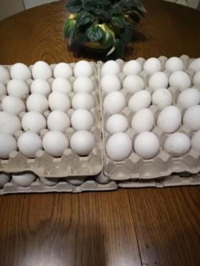 Sprzedaż jajek, Barlinek, oferta