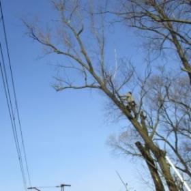 Wycinka drzew, odśnieżanie dachu, czyszczenie zbiorników, Jastrzębie-Zdrój, oferta