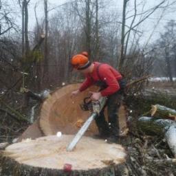 Wycinka i pielęgnacja drzew trudnych metodą alpinistyczną - Ogrodnik Ostrowin