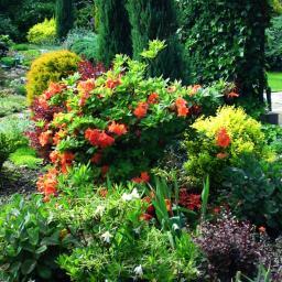 Projektowanie ogrodów Cierpice 1