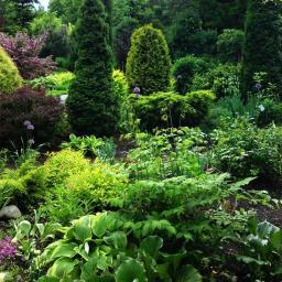 Projektowanie ogrodów Cierpice 5