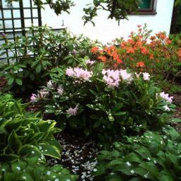 Projektowanie ogrodów Cierpice 20