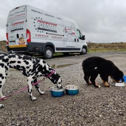 Licencjonowany transport zwierząt