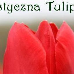 Pracownia Artystyczna Tulipan - Firma Ogrodnicza Zamość