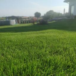 Trawnik z Rolki 700m2