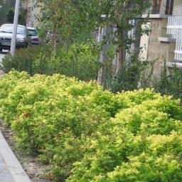 Ogrodnik Warszawa 6