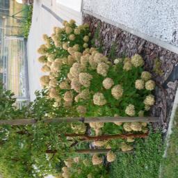 Projektowanie ogrodów Katowice 4