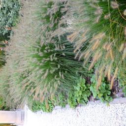nasadzenia roślin
