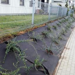 Ogrodnik Gdańsk 20