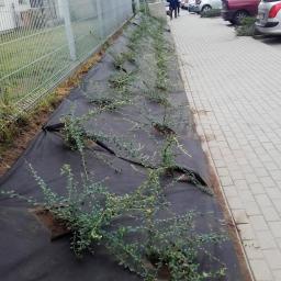 Ogrodnik Gdańsk 19