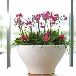 Flora Trend - Tarasy Cieplewo