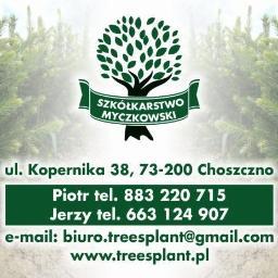 Treesplant Szkółkarstwo Sadzonki Świerk i Jodła - Sadzonki Choszczno