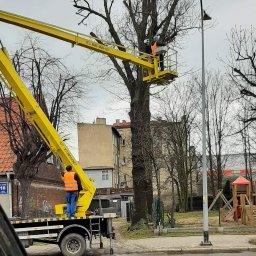 Pielęgnacja drzew oraz wycinka