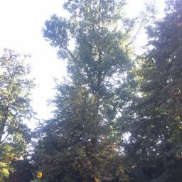 Ogrodnik Kosów Lacki 78