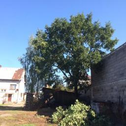 Ogrodnik Kosów Lacki 83