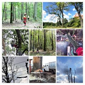 Wyrąb karczowanie usuwanie wycinka i pielęgnacja drzew metodą alpinistyczną - Prace działkowe Gostynin