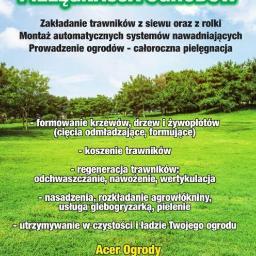 Acer ogrody Jeziorski Paweł - Parki, ogrody, rezerwaty Tłuszcz