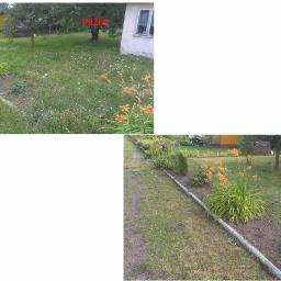 Golden Grass - Ogrodnik Zduńska Wola