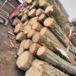 Firma Wielobranżowa - Drewno kominkowe Pełczyce