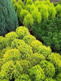 Premium Plants - Ogrodnik Szropy