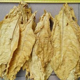 SOLIDUS Tobacco - Dostawcy i producenci Grudziądz
