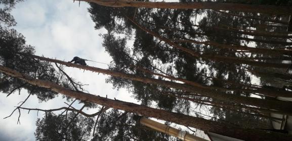 Stal-Mal - Dla przemysłu drzewnego Mlewiec