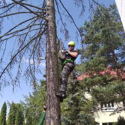 Usługi Leśne RayLas - Prace działkowe Włoszczowa
