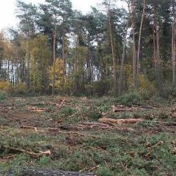 Drewno kominkowe Lębork 1