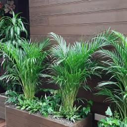 Aranżacja zimowych ogrodów. Sadzenie egzotycznych roślin.