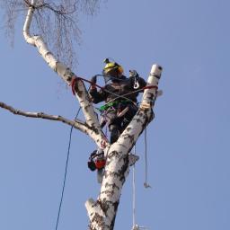 Drwale 艁ód藕 - Wycinka Drzew Metod膮 Alpinistyczn膮 i Tradycyjn膮 - Ogrodnik 艁ód藕