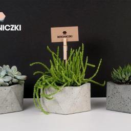 Ogród i rośliny Sobolew 3