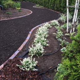 Projektowanie ogrodów Świecie 16